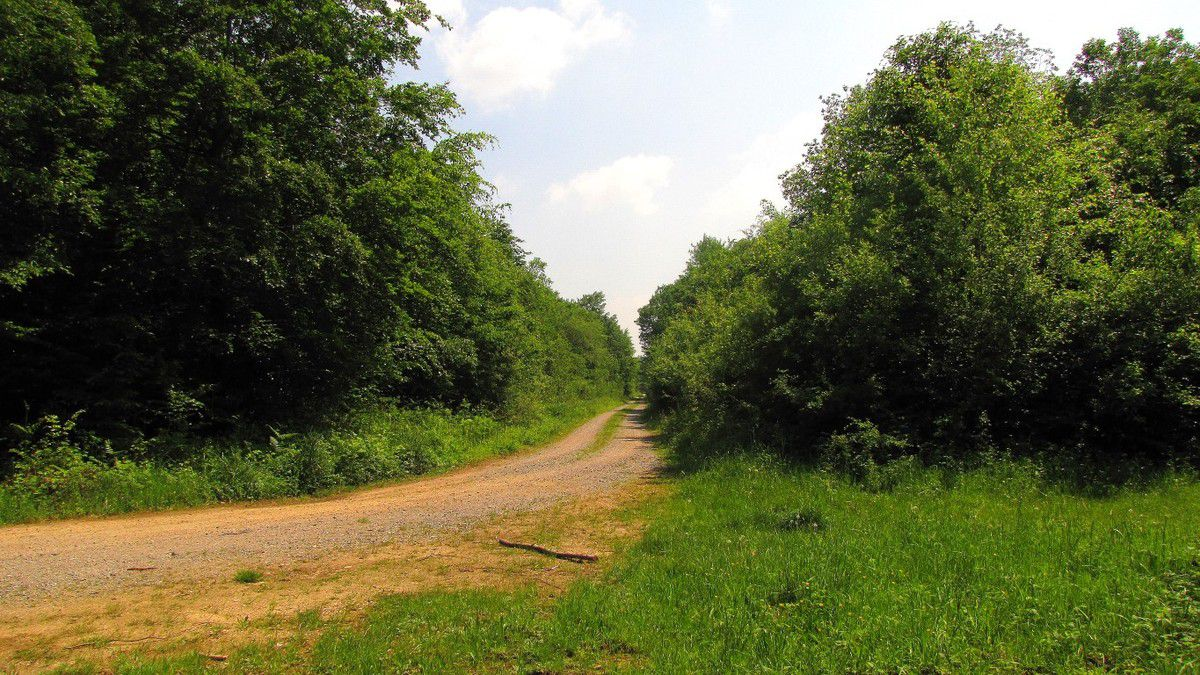 randonnée en forêt de Compiègne_Basse Queue_La Croix St Sauveur_les Molineaux