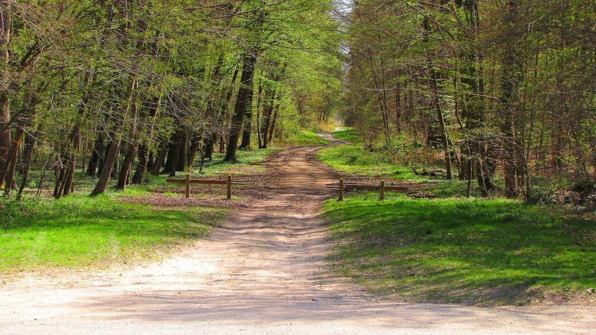 Randonnée en forêt de Compiègne_le Petit Octogone et l'Octogonet