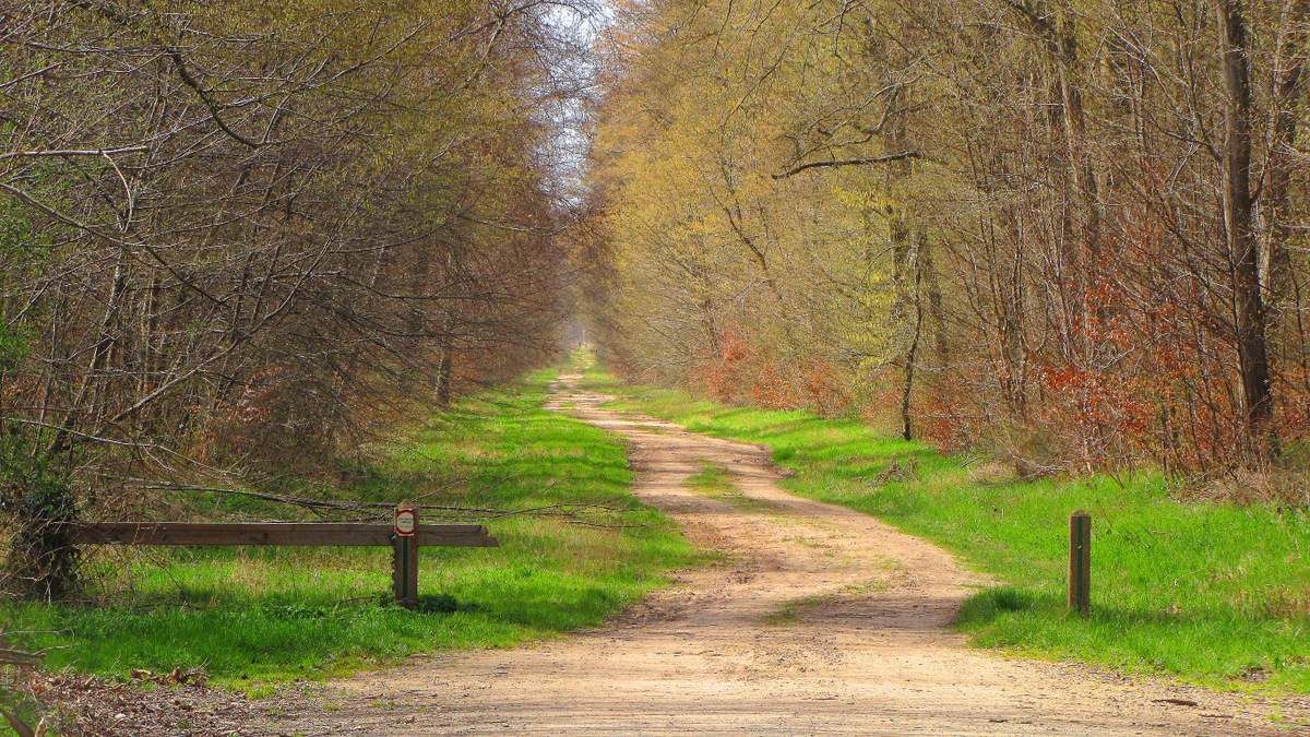 Randonnée en forêt de Compiègne_le Grand Octogone