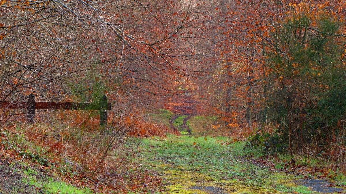Randonnée en forêt de Compiègne_la Landeblin_les Petits Monts