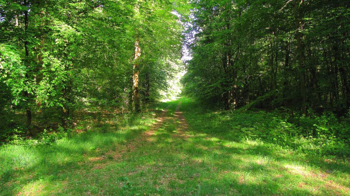 randonnée en forêt de Compiègne_Guet du Nid_Royallieu_la Bouverie_Marché Dupuis