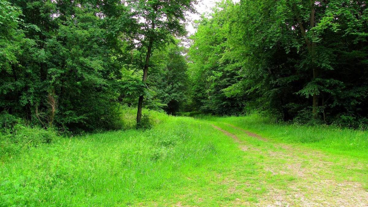 randonnée en forêt de Compiègne_les Beaux Monts_Mont du Tremble_étang du Buissonnet