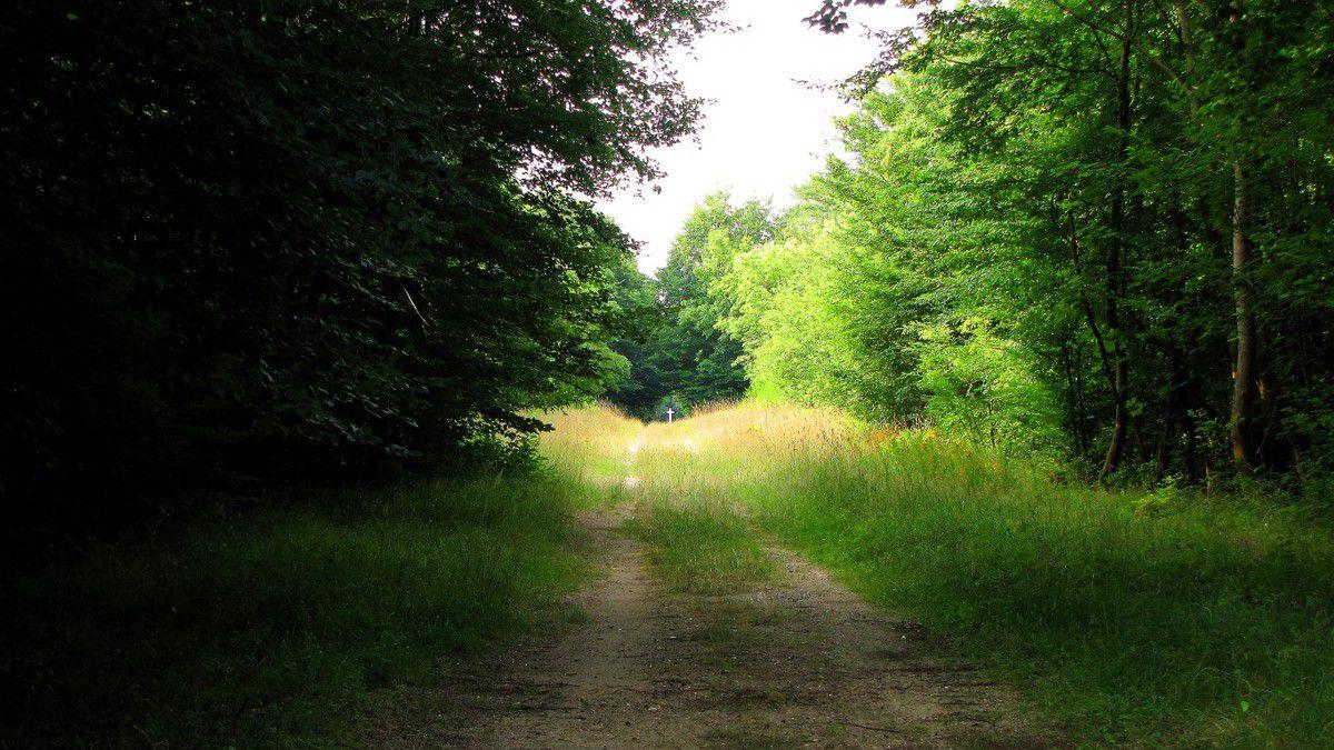randonnée en forêt de Compiègne_les Rossignols