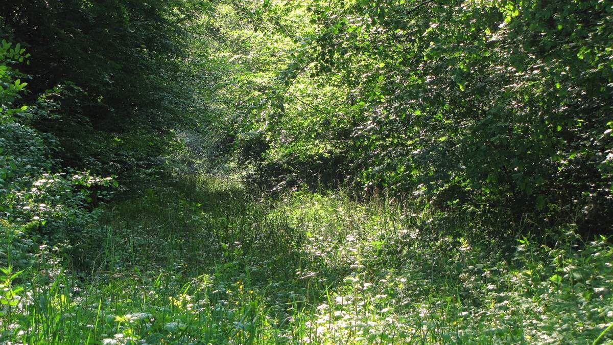 randonnée en forêt de Compiègne_Boquet_Gras_Béthizy_prés_du_Rosoir