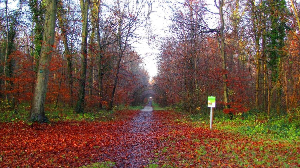 randonnée en forêt de Compiègne_Grand Parc
