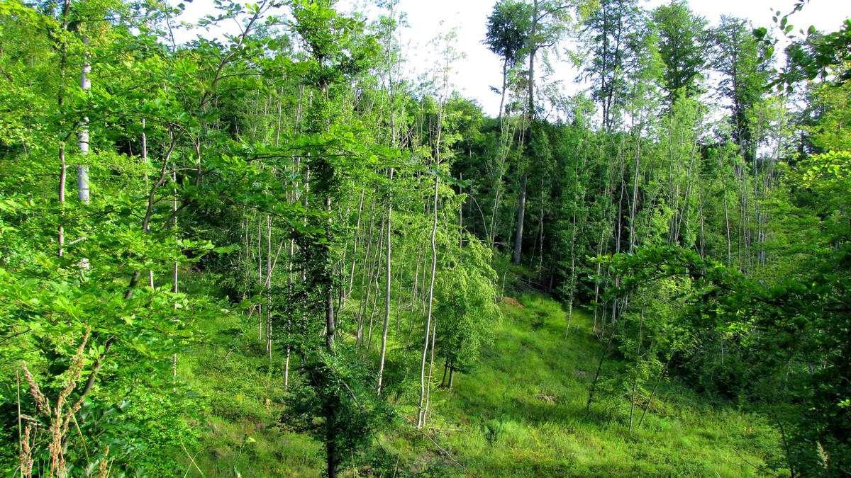 Randonnée en forêt de Compiègne_les Tournantes sur la Héronnerie et sur la Tête Saint-Jean