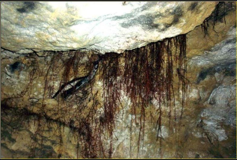 vues de l'intérieur de la Grotte des ramoneurs en forêt de Compiègne