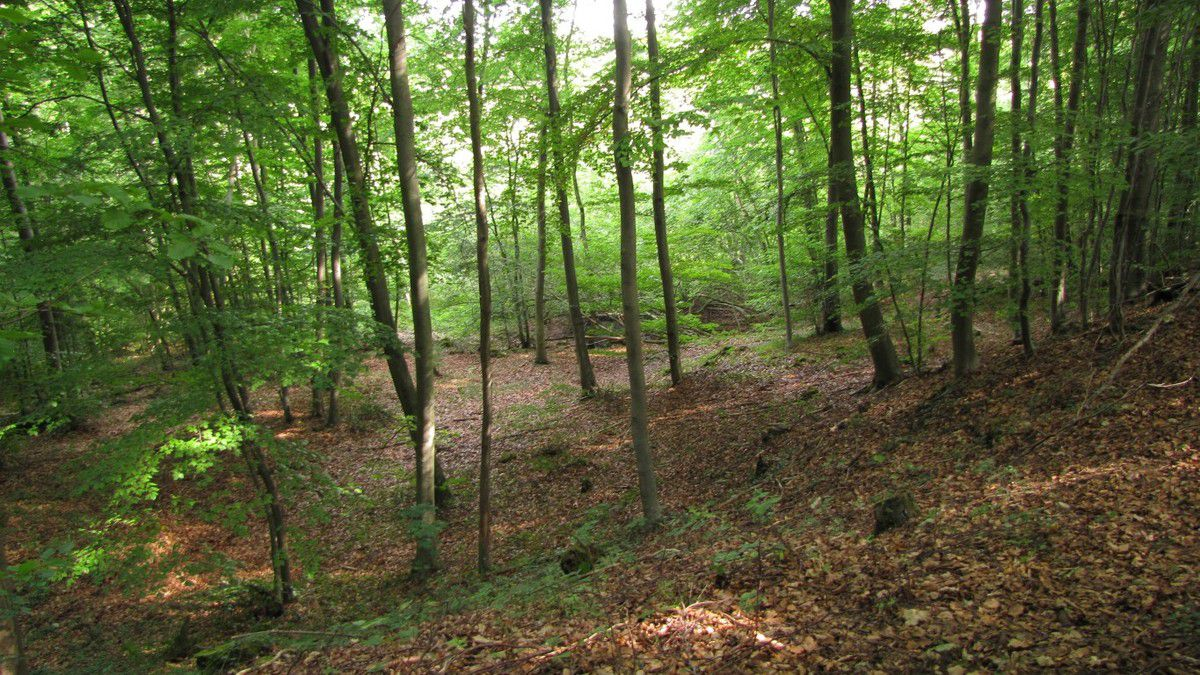 photos en Août 2019 de la Grotte des Ramoneurs en forêt de Compiègne