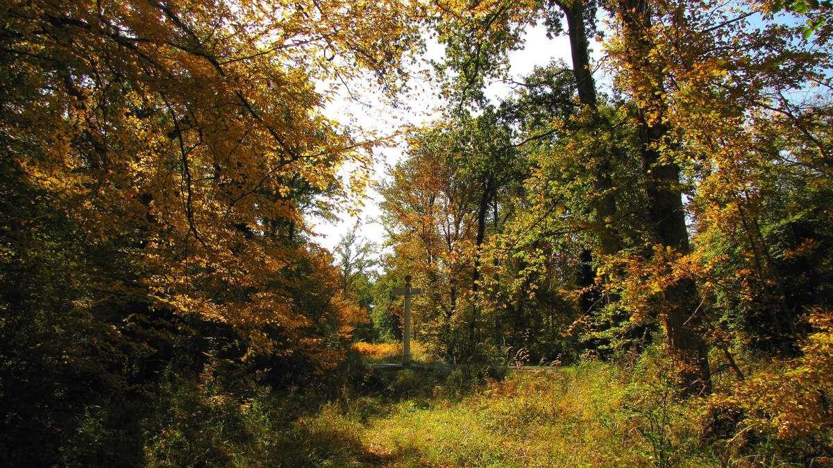 Randonnée en forêt de Compiègne_la Muette_les Clavières_la Brévière