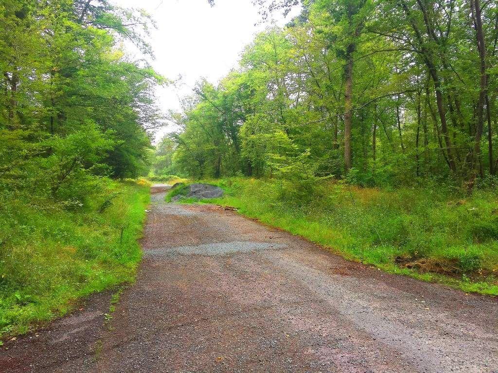 Randonnée en forêt de Compiègne_le vivier Corax_la Croix St-Sauveur