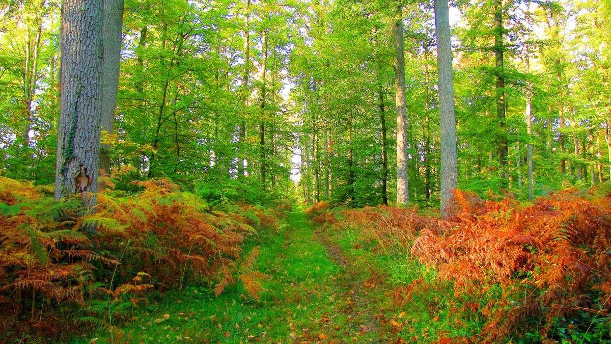 Randonnée en forêt de Compiègne_Mont St-Pierre_Mont Arcy_étangs de St-Pierre