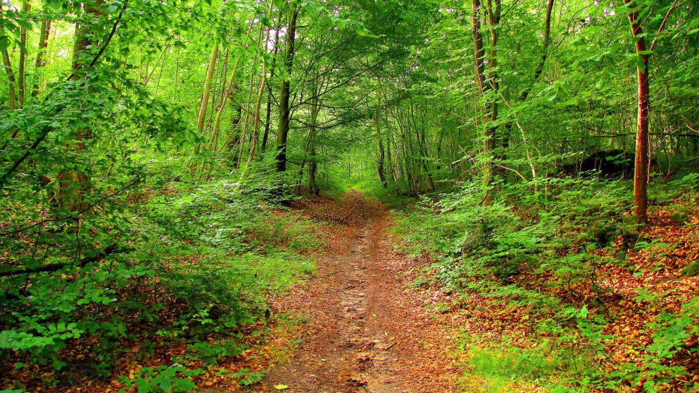 Randonnée en forêt de Compiègne_les Beaux Monts_carrefours du Liban et du Précipice de l'Ortille