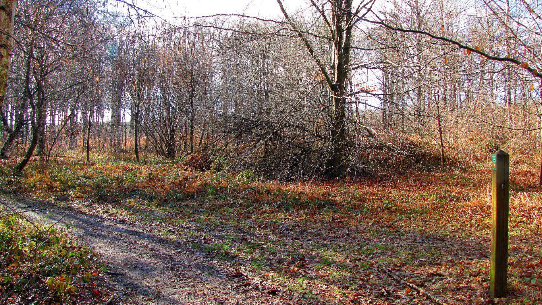 Randonnée en Forêt de Compiègne_la Gorge du Han_la Queue de St-Etienne