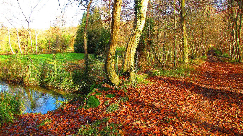 Randonnée en Forêt de Compiègne_le Mont Collet_le Mont Saint-Mard_le RP de l'Armistice