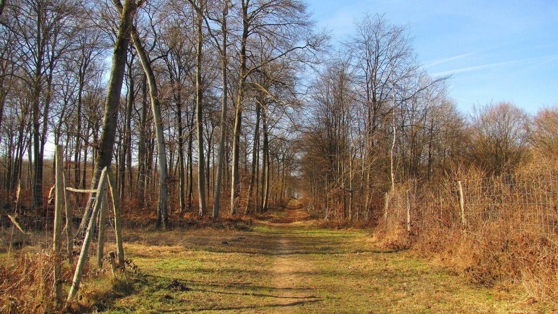 Randonnée en Forêt de Compiègne_la Grotte des Ramoneurs_le Mont Berny