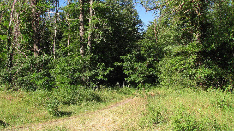 en forêt de Compiègne, le carrefour du Buissonnet