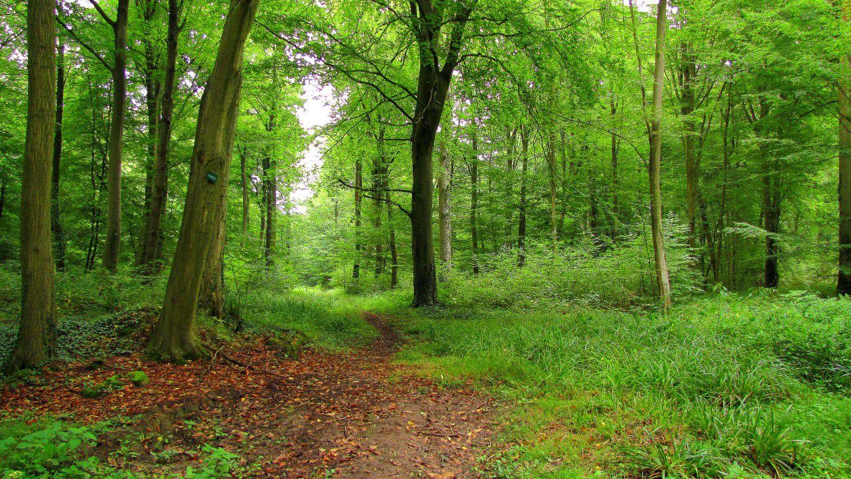 le carrefour d'Acaste en forêt de Compiègne