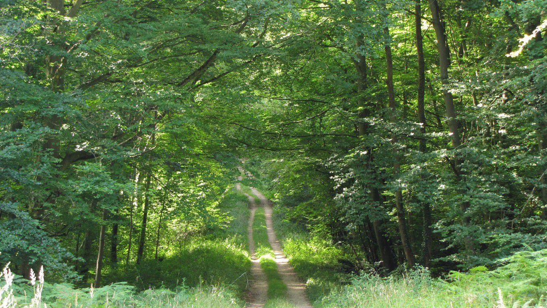 le carrefour de Champlieu en forêt de Compiègne