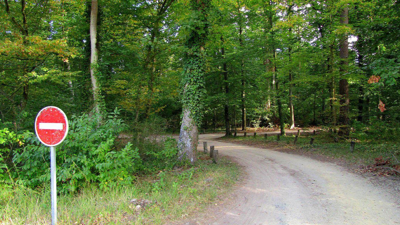 le carrefour du Tréan en forêt de Compiègne