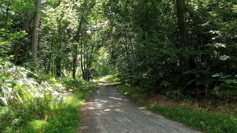 le carrefour du Génie de l'Air en forêt de Compiègne