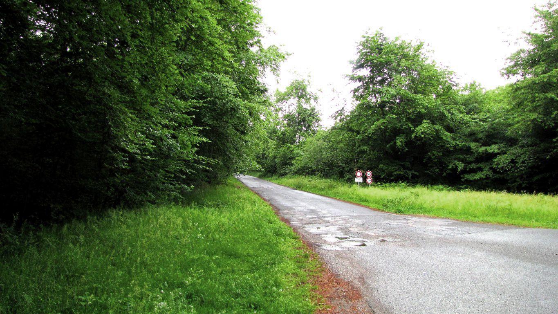 le carrefour des Vineux en forêt de Compiègne