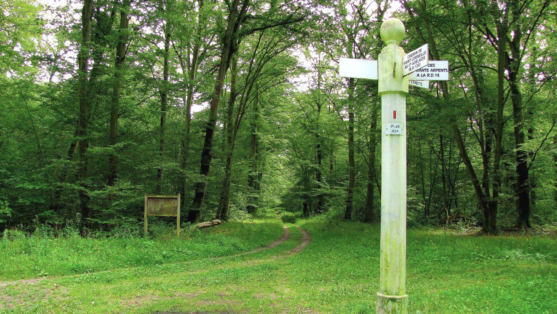 en forêt de Compiègne, le carrefour des Jeux
