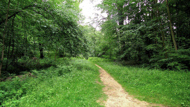 en forêt de Compiègne, le carrefour des Beaux Monts