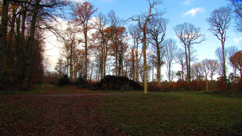 le carrefour de l'Hermine en forêt de Compiègne
