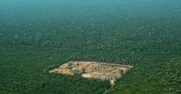 Défendre nos arbres et en replanter d'autres, un...