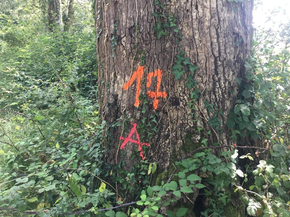 Tout autour du tronc, une micro-biodiversité riche