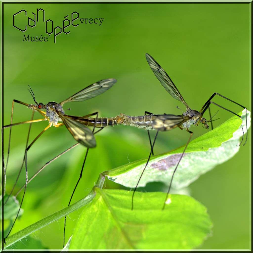 Galerie Macro insectes CAEN CALVADOS NORMANDIE visite musées