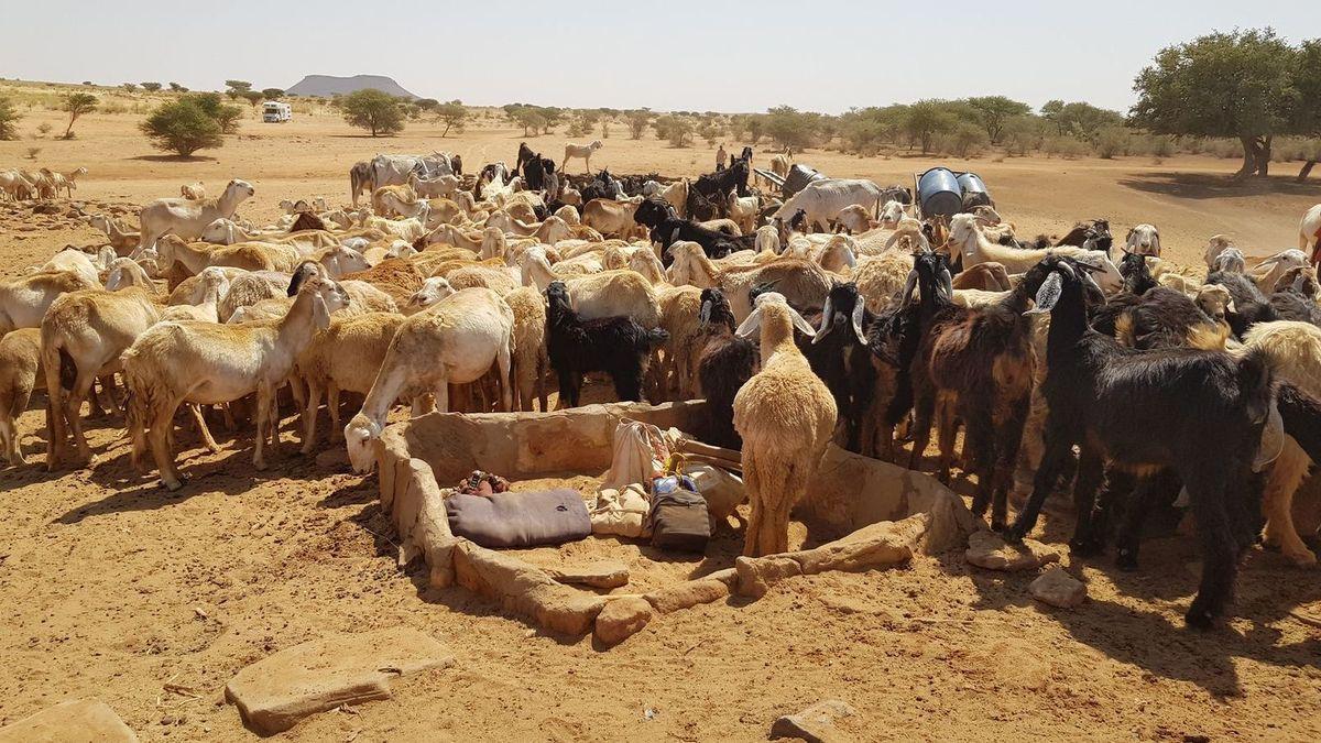 Montée d'adrénaline sur les pistes soudanaises