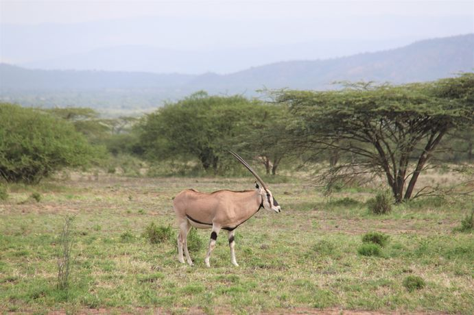 Voyager en Ethiopie en camping-car : infos pratiques et bilan