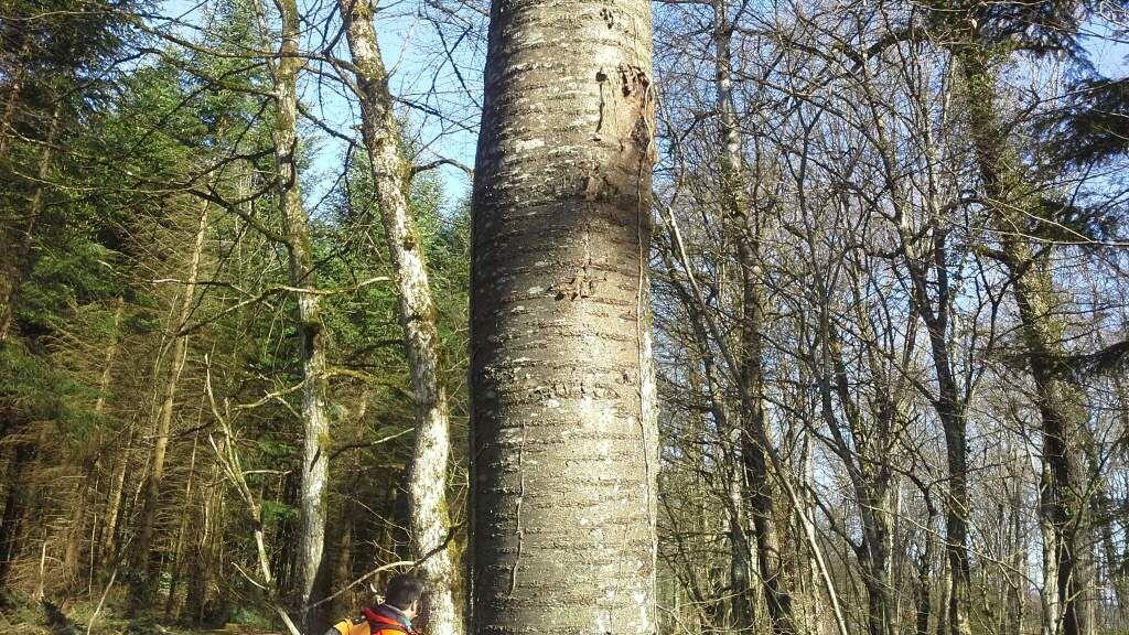 Découverte du bois avec l'ONF