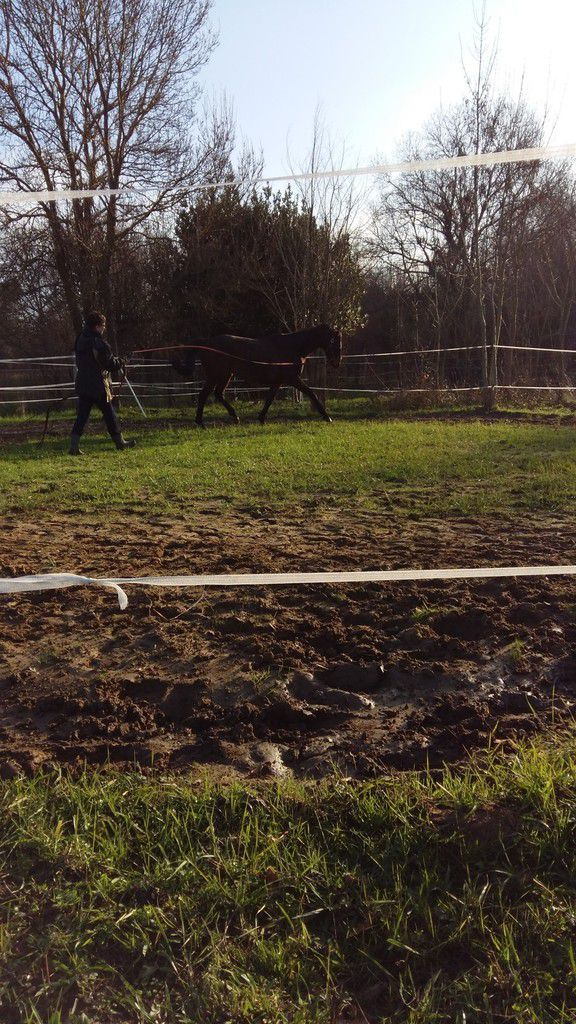 Rond de longe pour chevaux au pré