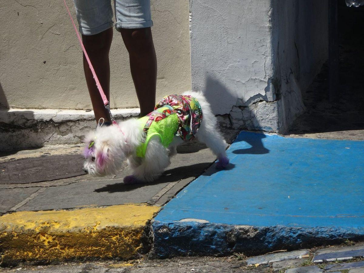 A San Juan, même les chiens bas sur pattes sont hauts en couleurs.