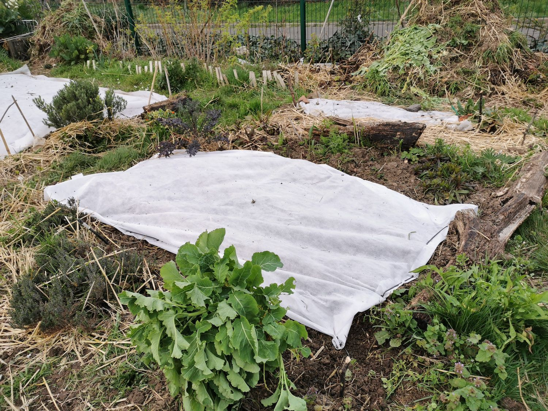 Dans le jardin de Danielle, à Loos.