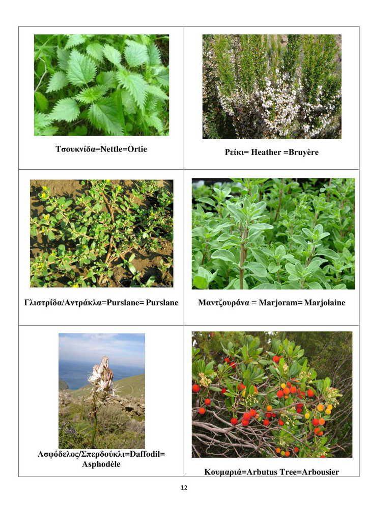 ACTION 2 GRECE - Dictionnaire de la flore et la faune de a Grèce Centrale