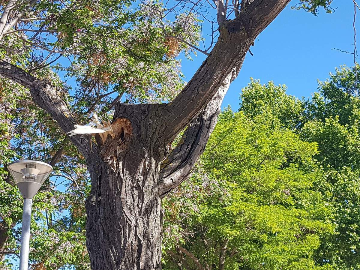 Le vent a fait souffrir les arbres ce matin