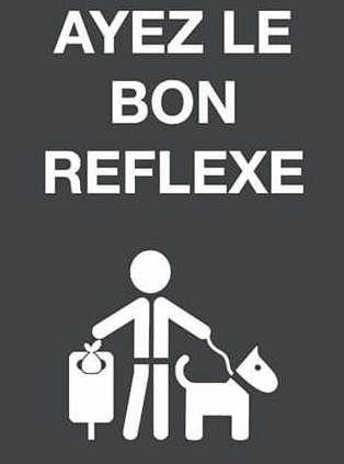 Info Mairie: promenades canines, respectez les règles