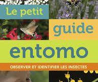 Le petit guide entomo : observer et identifier les insectes, Vincent Albouy, Delachaux et Niestlé, 2017