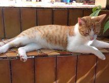 CADO dit KDO - chaton mâle - né le 02 avril - adopté
