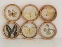 6 Dessous de verre papillons Années 60 - Vintage