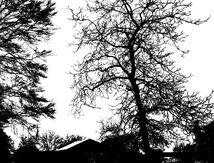 Le Grand-Bois sous la neige