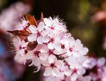 Vive le printemps !!