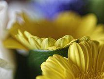 Fleurs en intérieur