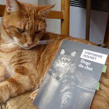 Eloge du chat - Stéphanie Hochet