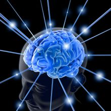 Neurosciences, top départ pour la semaine n°4