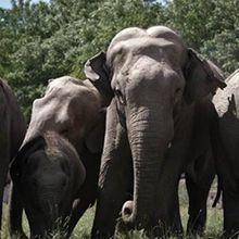 Les docs de l'été : « Au PAL, le zoo le plus étonnant de France » ce mardi sur TMC