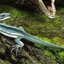 9 espèces nouvelles dénommées Obama en hommage à l'ancien Président